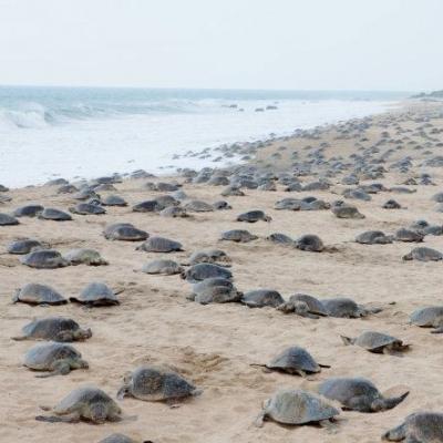 Turtles en Ixtapilla IV. Precio según soporte y medidas
