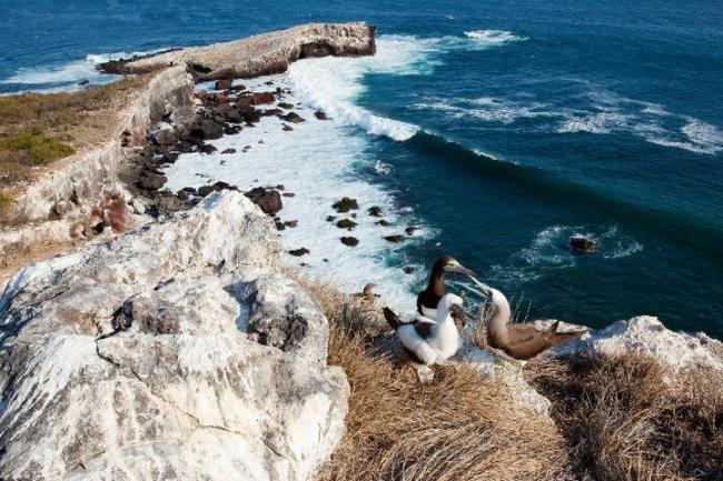 The cliff. Precio según soporte y medidas