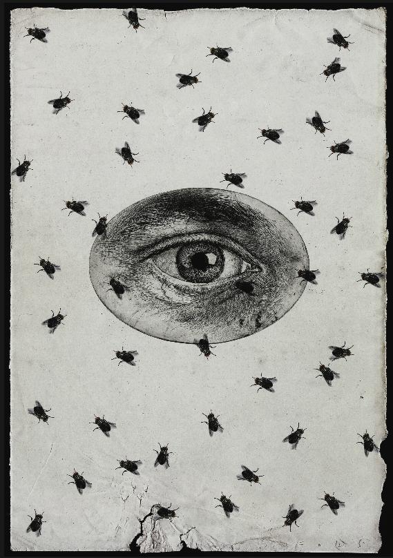Ojo con moscas