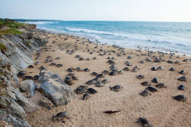 Turtles en Ixtapilla III. Precio según soporte y medidas