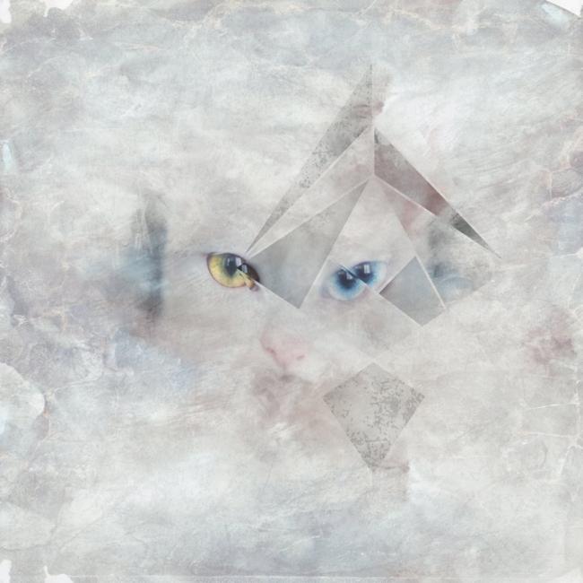 Salvavidas - Fernanda Diez