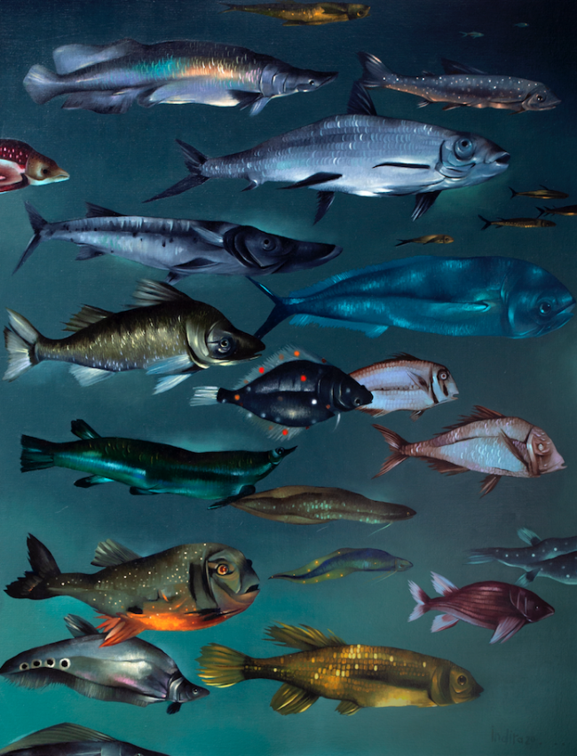 Estudio de peces - Indira Castellón