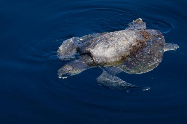 Turtle. Precio según soporte y medidas - Sigi Pablo