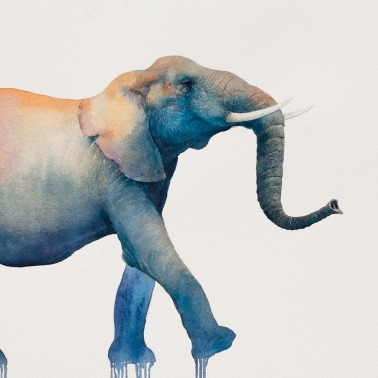 Marcha del elefante