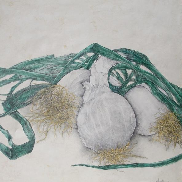 Cebollas 2