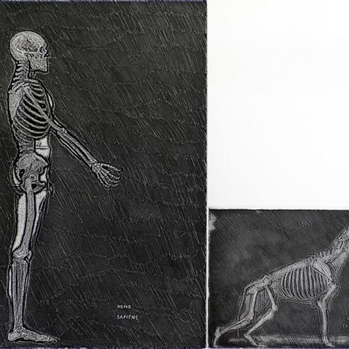 Homo sapiens y cannis familiaris