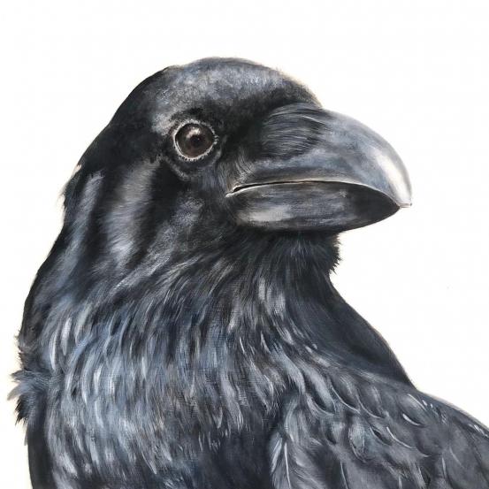 Cuervo 3