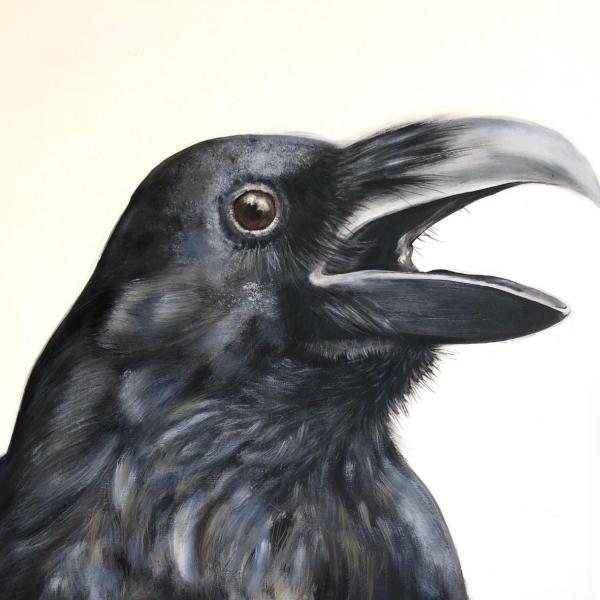 Cuervo 4