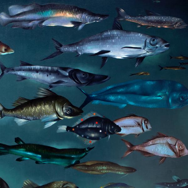 Estudio de peces