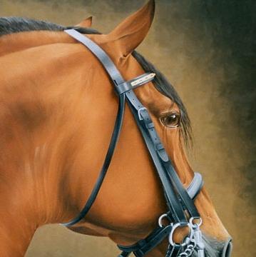 Retrato equino IV