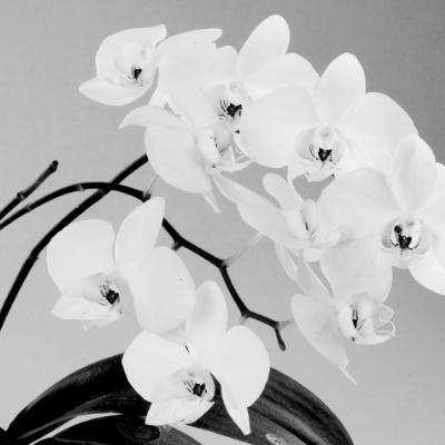 Orquidea I. Precio según soporte y medidas 2/20