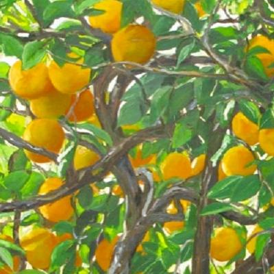 Naranjo