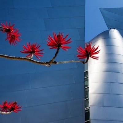 Los Ángeles. Precio según soporte y medidas