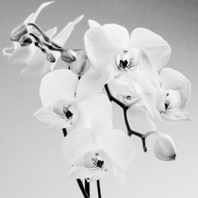 Orquidea II. Precio según soporte y medidas 2/20