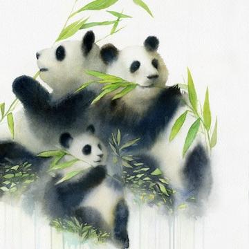 Panda con bambú