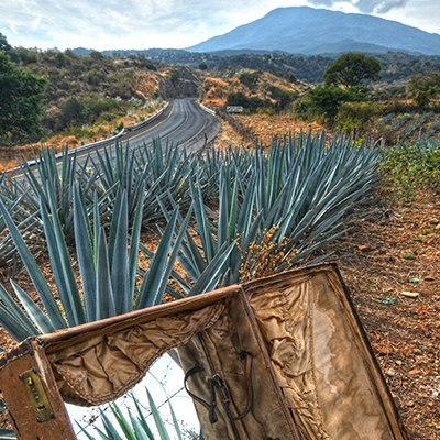 Todos los caminos conducen a Tequila